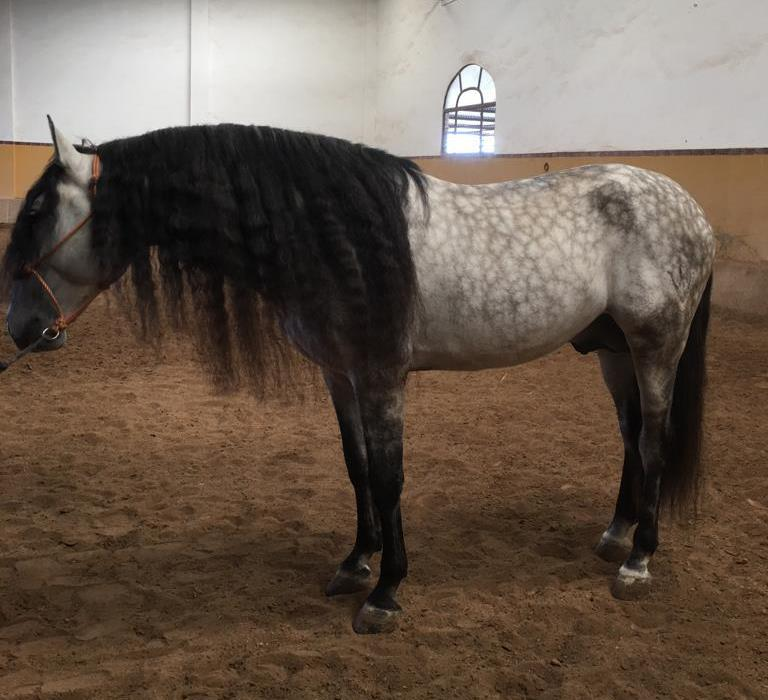 HORCHATERO CARACOL Image