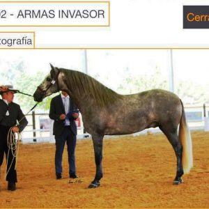 Armas Invasor 1 - Copy